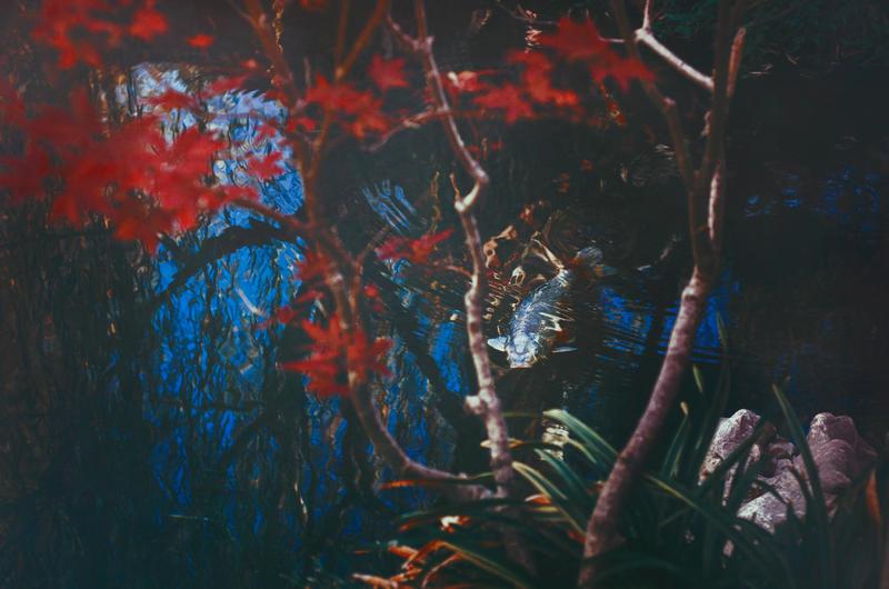 Red Maple I by EmiNguyen
