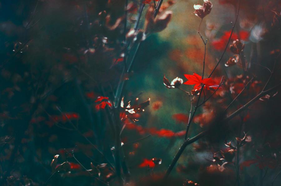 Down the Sky by EmiNguyen