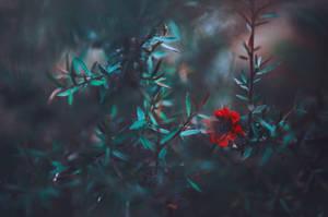 Yesterday's Blur