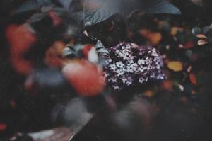 Leaf to Leaves III