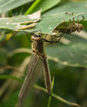 Dragonfly and its workout