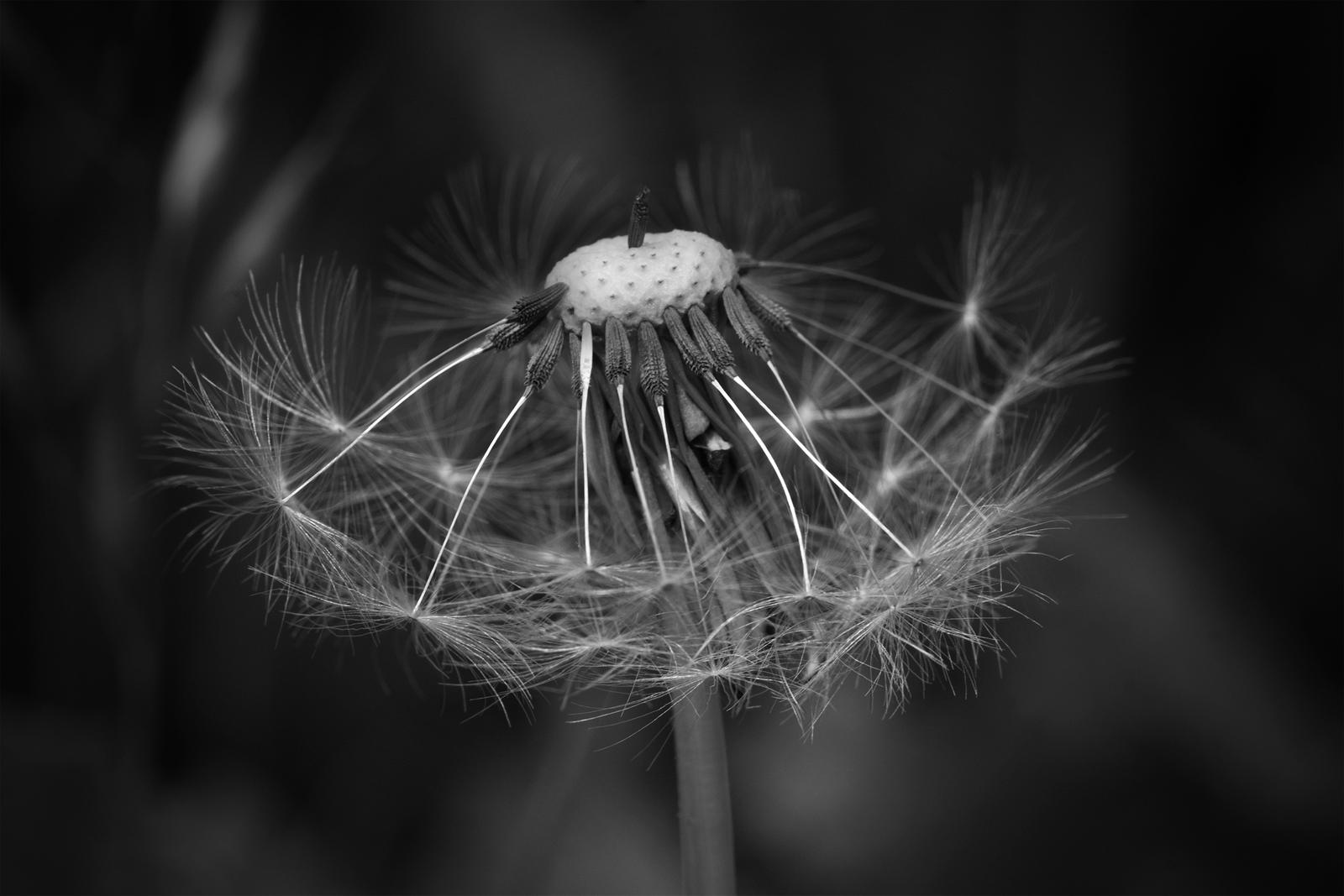Hairy Flowers 2