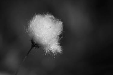 Hairy Flowers 6