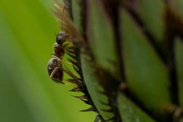 Macro Monsters: ant (02)