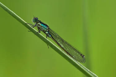 Macro Monsters: dragonfly (01)