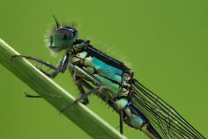 Macro Monsters: dragonfly (02)