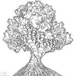 Tree-Project-9