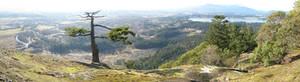 Mount Tzouhalem Panorama