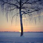 frozen light by detail24