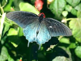 Blue Beauty by momlovespics