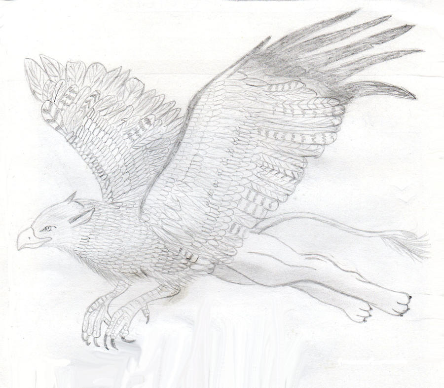 how to draw a griffin flying