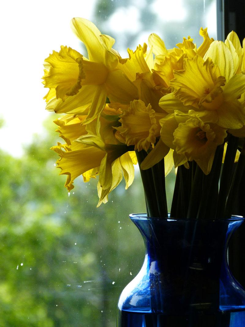 daffodil bouquet by bonnyblue22