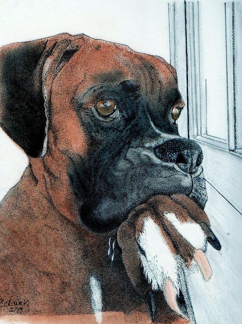 Boxer2-5-2014 by cashin1