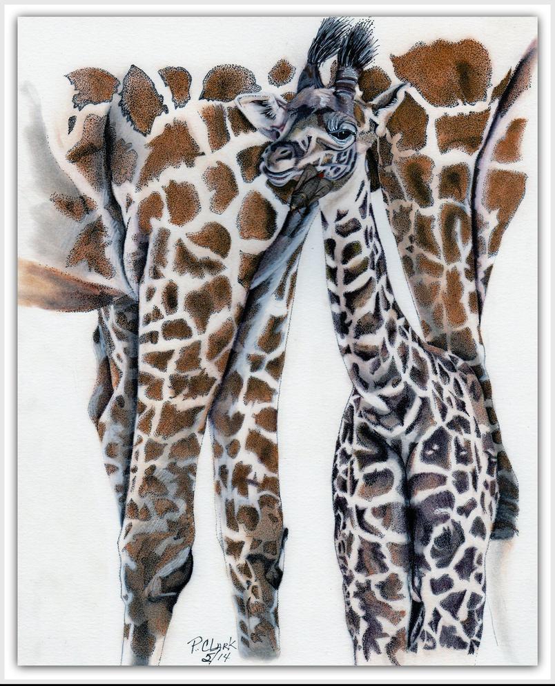 Baby Giraffe by cashin1