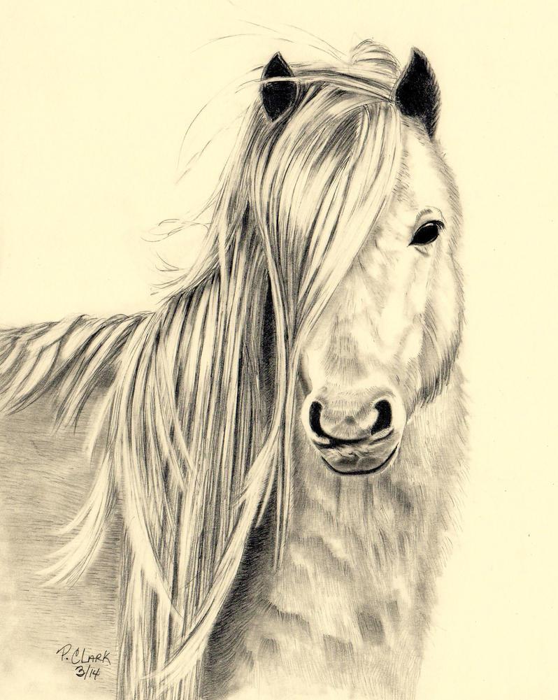 Careddau Pony by cashin1