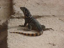 Lizard Stock by Cloozy