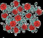 Roses PNG
