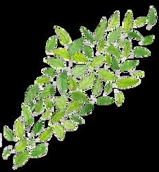 Leaves PNG by milkyanunnie