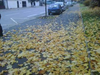 fallen autumn leaf