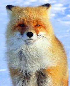 Fox147's Profile Picture