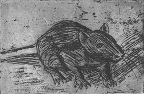friendly rat