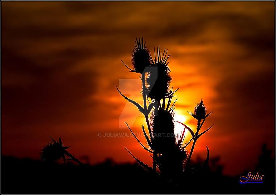 Sunset 2 by JULIAWA