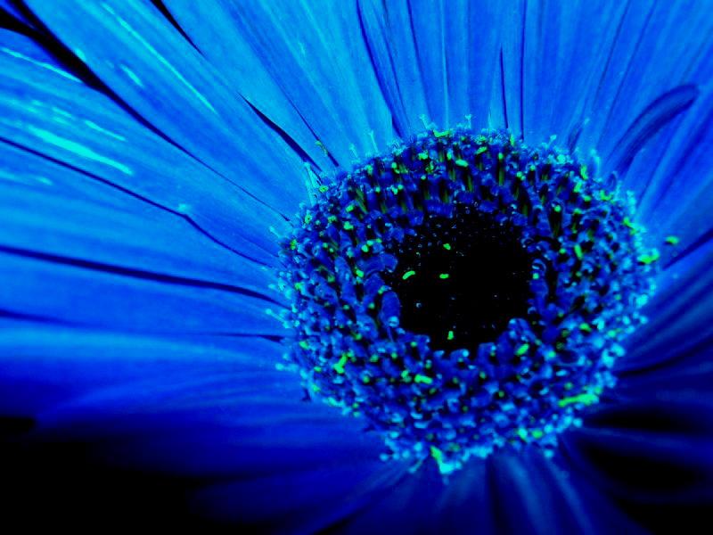 blue by maverick-t11