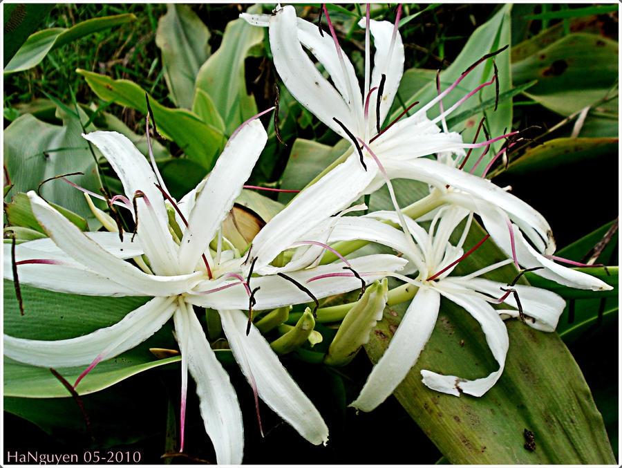 http://fc05.deviantart.net/fs71/i/2010/125/c/a/Wild_flower_by_Lykhach119.jpg