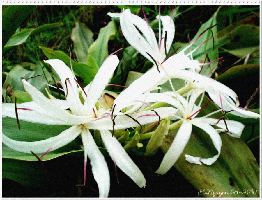 http://fc08.deviantart.net/fs71/i/2010/126/c/5/Wild_flower_2_by_Lykhach119.jpg