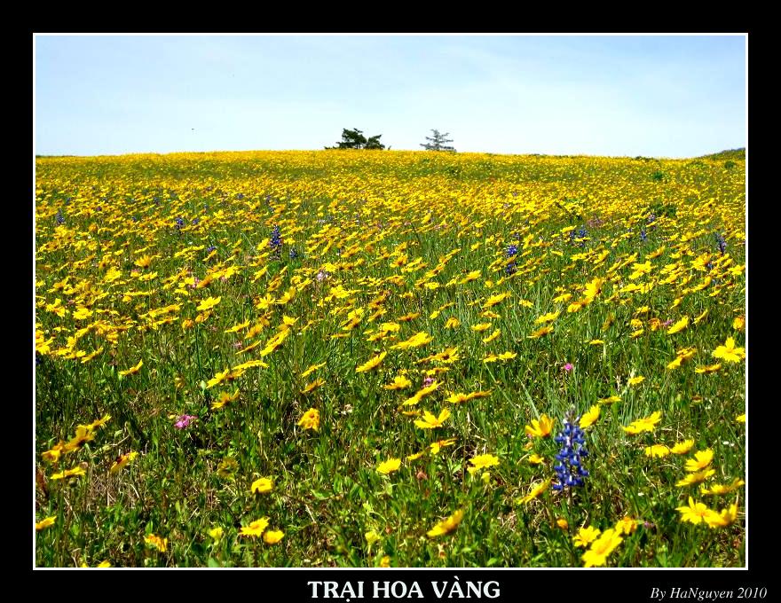 http://fc09.deviantart.net/fs71/f/2010/130/4/3/Yellow_field_by_Lykhach119.jpg