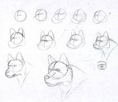How I draw dog heads by AvatardsUnite