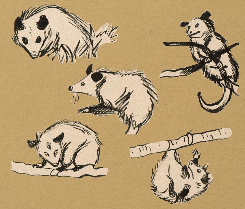 Possum brush pen sketches by solitaryzombie on DeviantArt