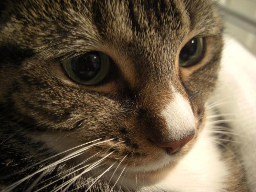 Cat Stock 2 by bubblewrap-pancakes