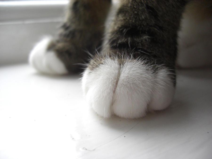 Paws by bubblewrap-pancakes
