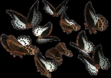 Marble Swallowtail butterflies