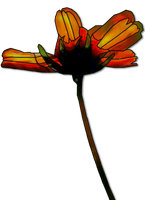unique flower png clipart