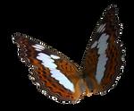 Queen Alexander Butterfly PNG