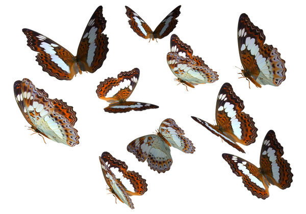 Admiral Butterfly Clipart PNG by madetobeunique
