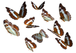 Admiral Butterfly Clipart PNG