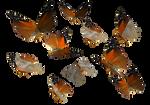 Russet Flipper Butterfly PNG