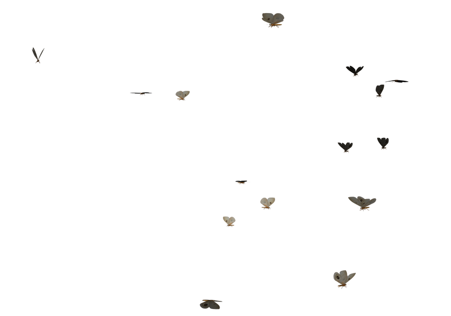 bunch swarm of butterflies PNG by madetobeunique