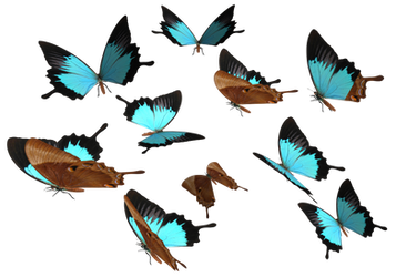 Peacock Royal Butterfly PNG