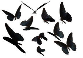 Blue Swallow Tail Butterflies by madetobeunique