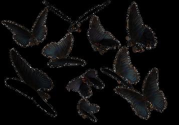 Blue Swallow Tail Butterflies