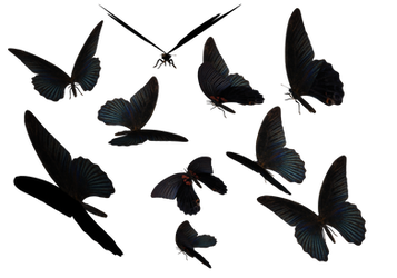 Blue Swallow Tail Butterflies