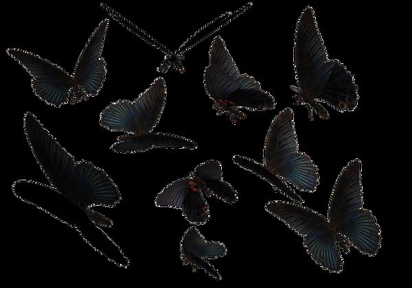 Butterflies Transparent Tumblr Blue swallow tail butterflies