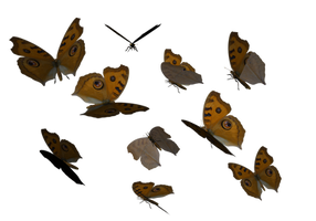 Argus Butterfly clipart PNG by madetobeunique