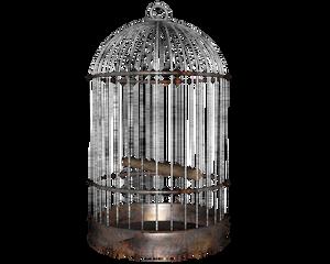bird cage side shot of many