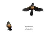 American Robins Cut-Out Stock