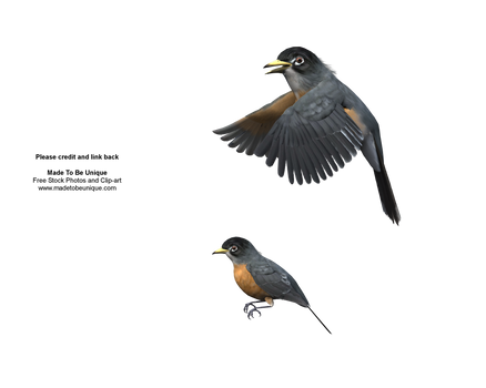 Robin birds flying 3d cut-out
